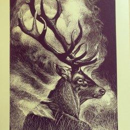 n.75, Rocco Lombardi, Deer in October, serigrafia - 1 colore - 35x50 cm - 33 pezzi firmati e numerati - Carta Canson Colorline avoriata 220 grammi