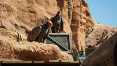 Photo of Knott's Berry Farm Reopens Calico Mine Ride