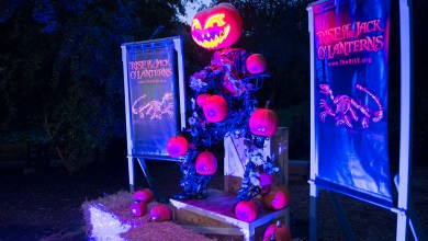 Photo of The Rise of the Jack O' Lanterns