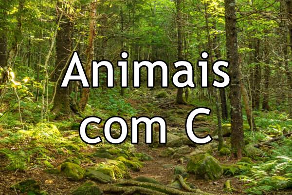 Animais com C