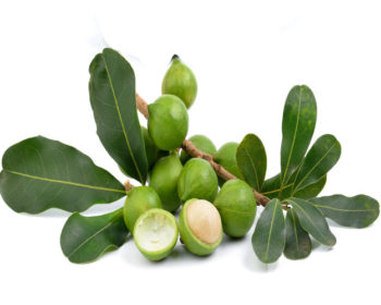 A picture of Macadamia nuts