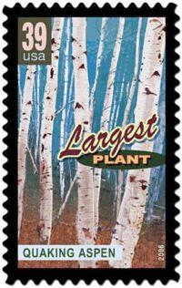 The Pando stamp