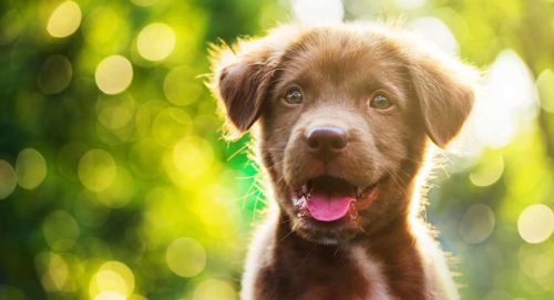 A picture of a cute puppy