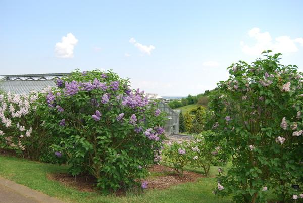 les jardins botaniques du grand nancy