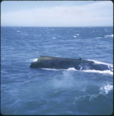 Part of the TEV Wahine still in the sea during the salvage operation.