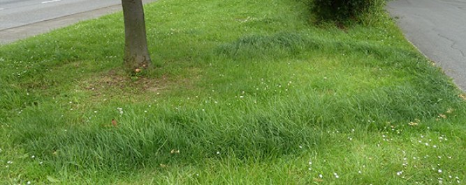 Mushroom ring in grassland