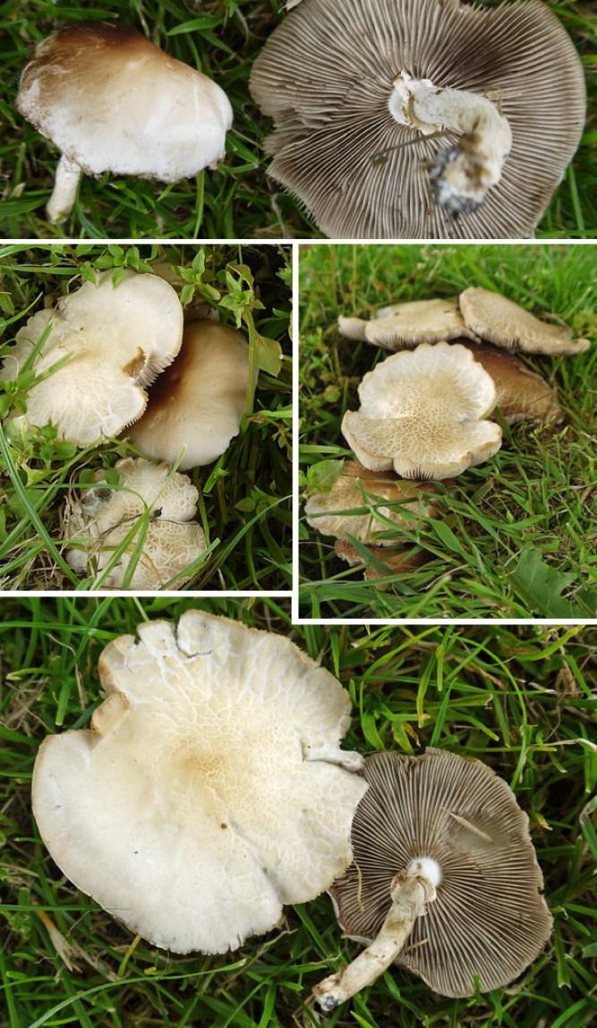 Polar Fieldcap images