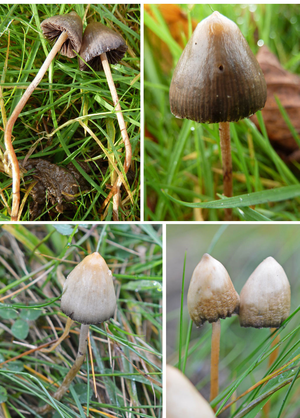 Images Of Magic Mushrooms