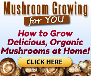Mushroom Growing 4 You