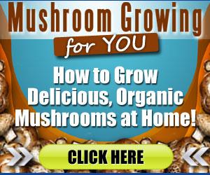 Mushroom Growing Guide