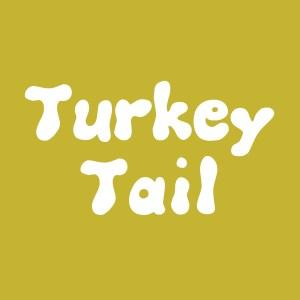 Turkey Tail culture. Medicinal. Trametes versicolor