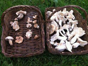 Saint George's mushroom baskets