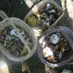 Preserving wild mushrooms
