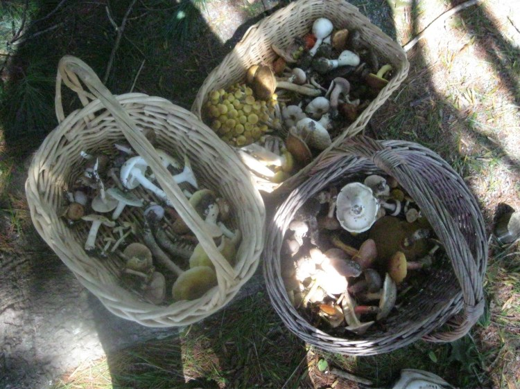Baskets of mushrooms