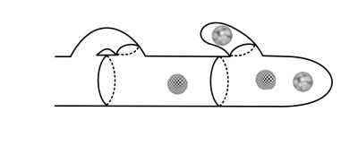 """A cell wall forms behind one pair of nuclei. One of the remaining nuclei remains behind in the """"old"""" cell, and the other one passes through the hook cell."""