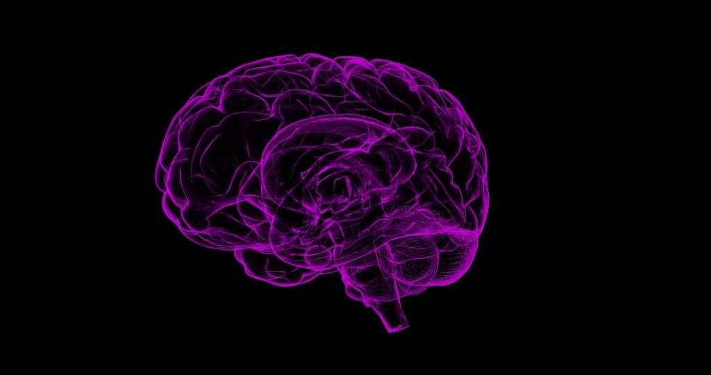 cervello-memoria