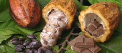 cacao-426×188