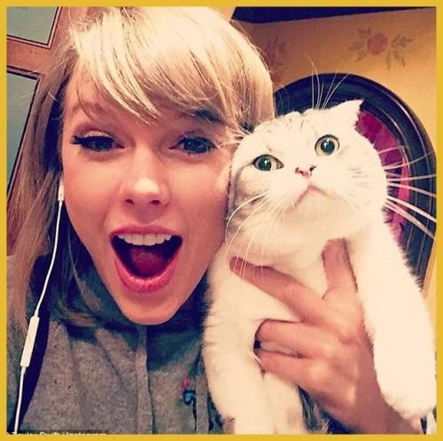 Taylor Swift e gato