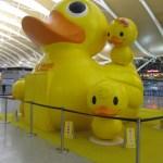 Ducks at Shanghai Pudong International Airport