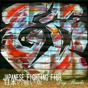 Japanese Fighting Fish - Day Bombs