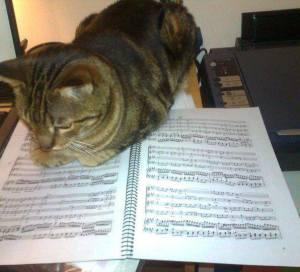 cat-score