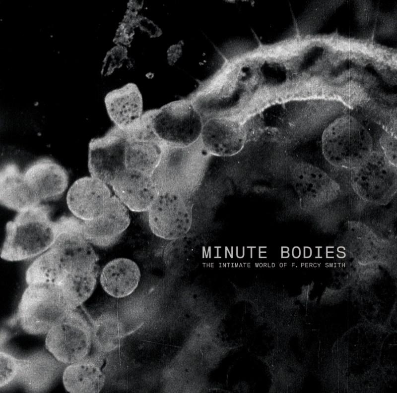 Tindersticks - Minute Bodies