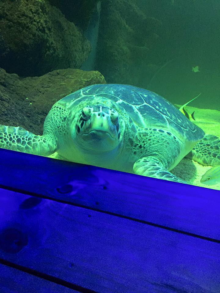 Turtle at Hunstanton
