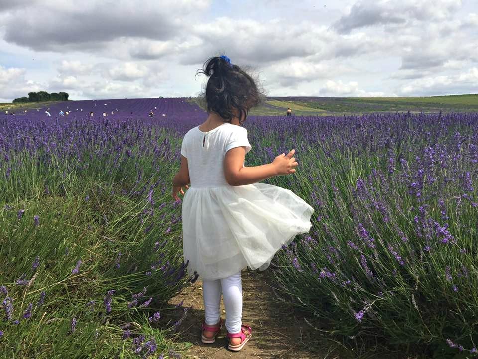 Hitchen Lavender field