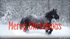 Merry Christmas from Saving America's Mustangs