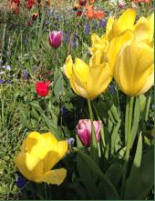 graham_flowers