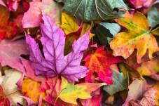 Basteln Herbst
