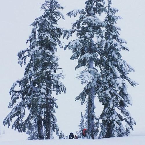 Mount Baker Ski Resort WA
