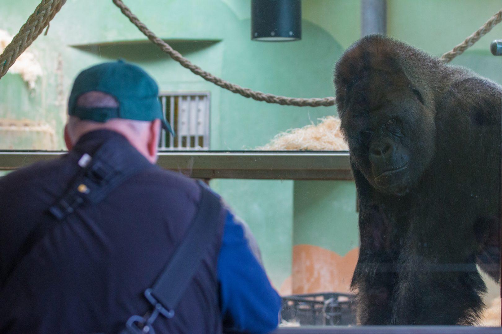rotterdam zoo must see