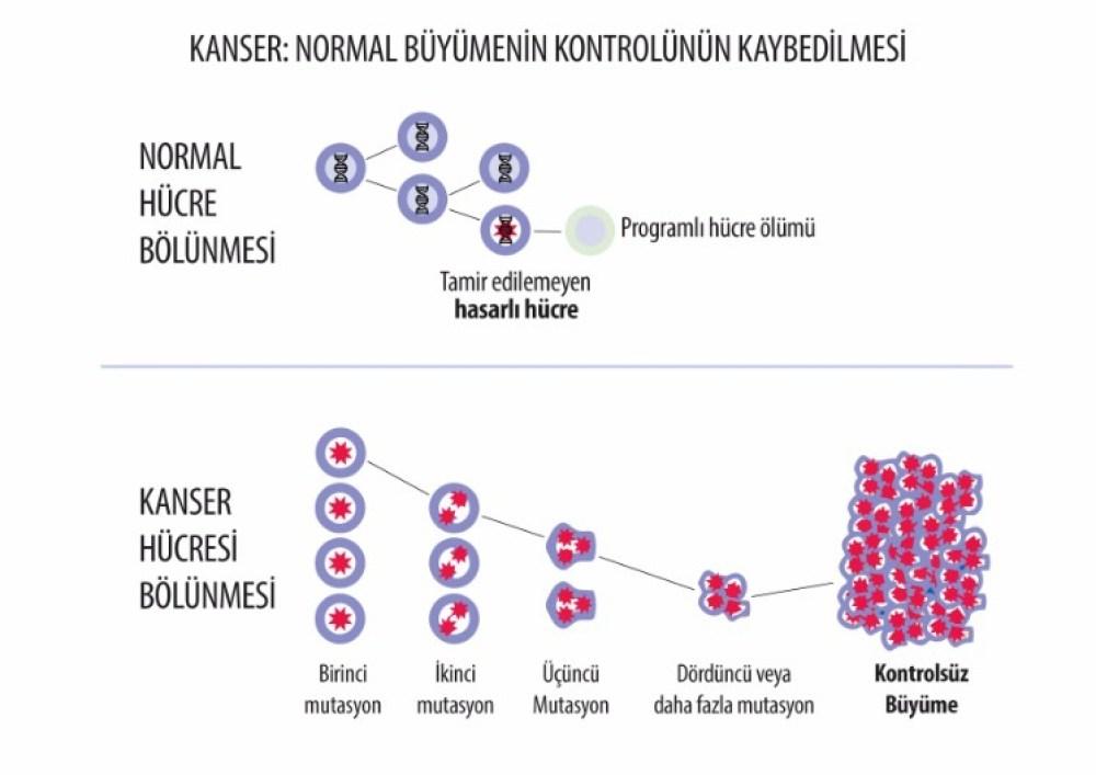 Kanser hücre bölünmesi