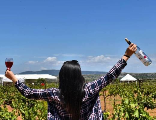 100 vinos mexicanos 2019