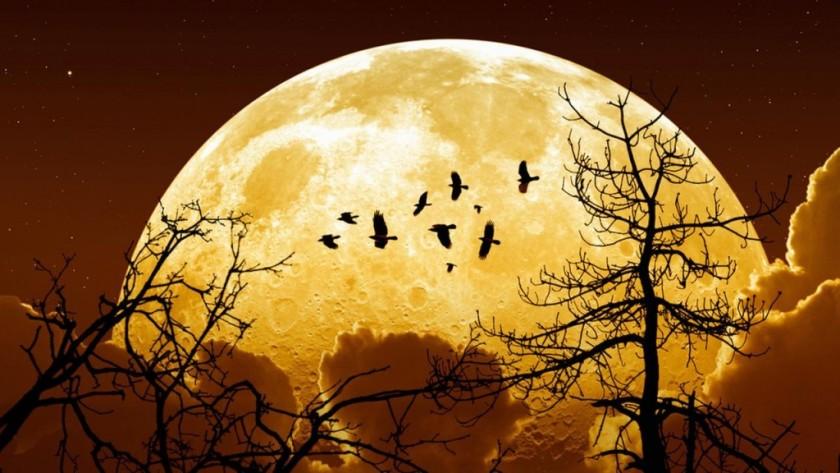 Resultado de imagen de luna del 14 de noviembre