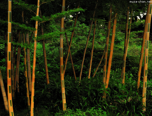 Bamboo at Imperial Palace Garden, Tokyo
