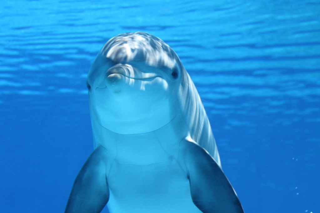 India's first Dolphin Observatory to be made in Bihar