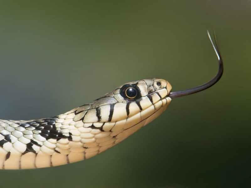 prabhat tara snake hospital muzaffarpur