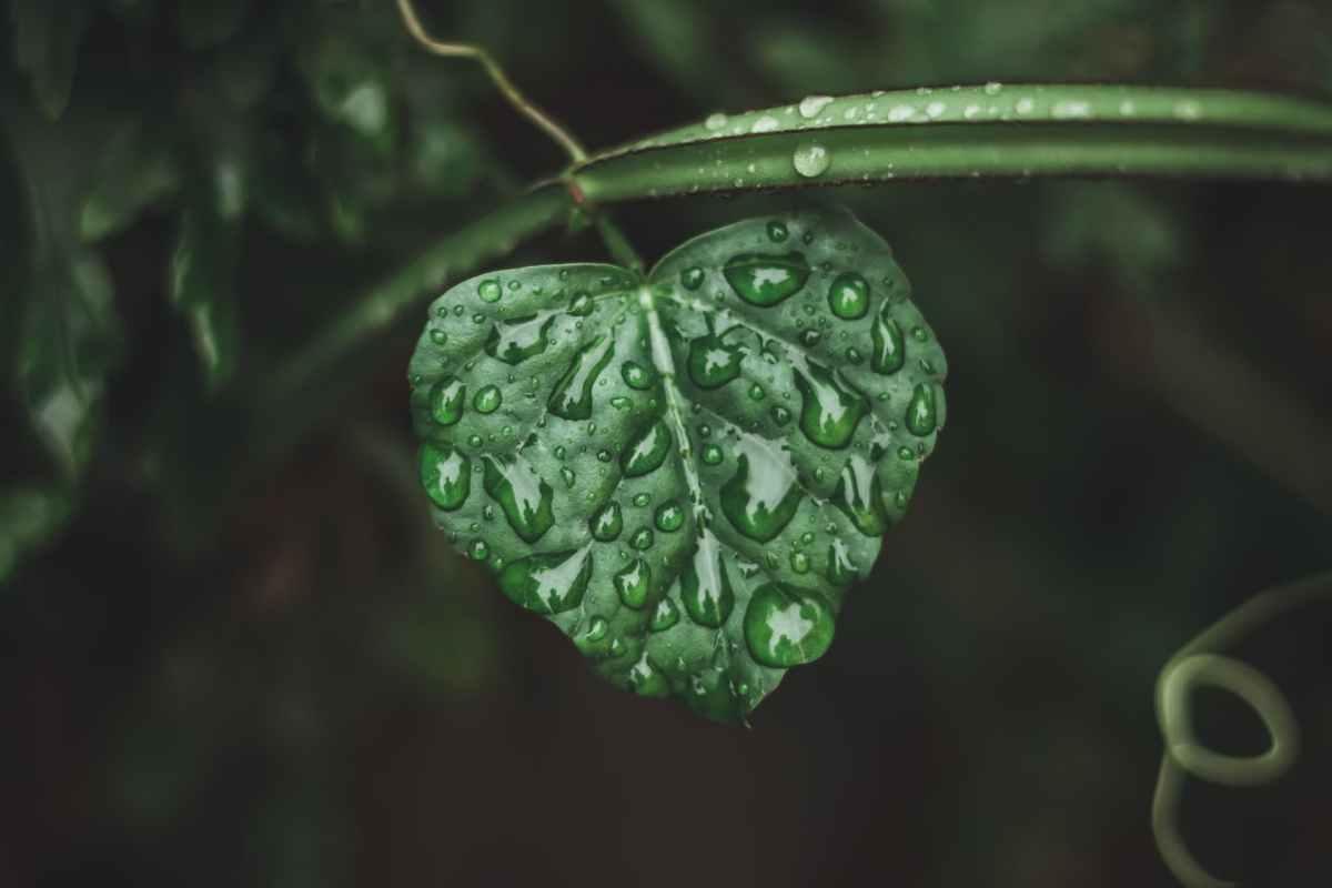 Monsoon may reach bihar on june 15