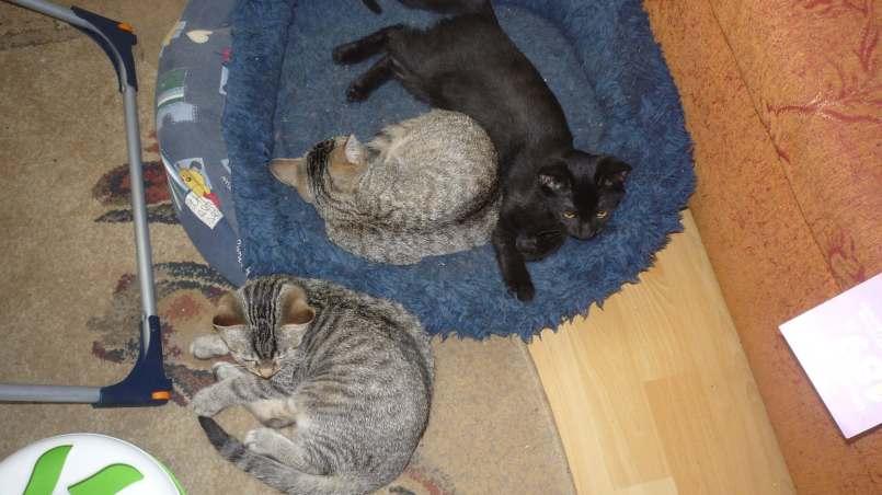 Koty do adopcji