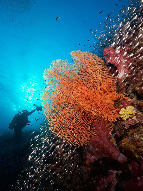 Thailand Liveaboard Diving Adventures
