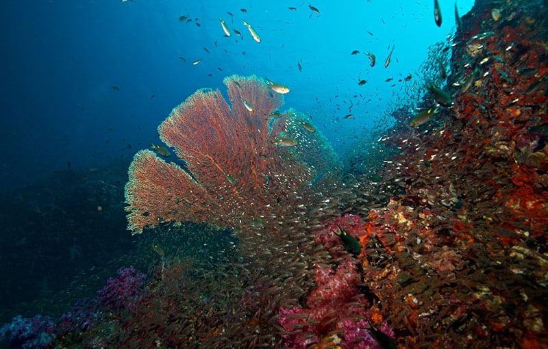 Thailand Liveaboard - MV Giamani Richelieu Rock