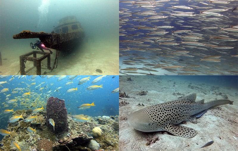 Scuba Diving Impressions