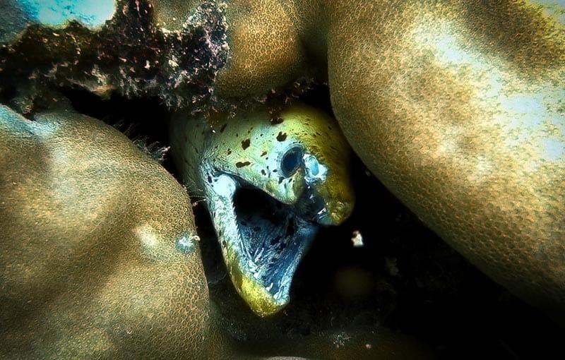 MV Giamani - Phi Phi Island Diving