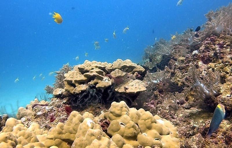 Thailand Dive Sites Hin Bida Phi Phi Islands