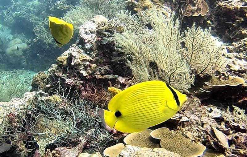 Phi Phi Island Diving - Koh Bida Nai