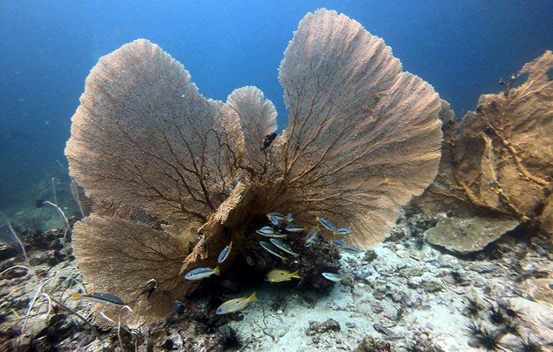 Shark Point Phuket Dive Site MV Giamani