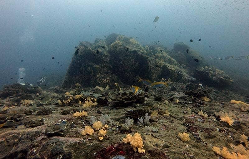 Koh Bon Pinnacle Hin Luang - Similan Islands Diving