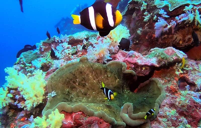 Similan Islands Diving Koh Bon